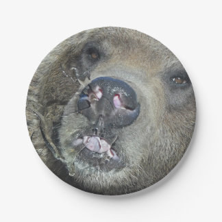 Prato De Papel Urso engraçado Cub do urso que lambe a janela de