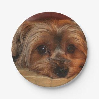 Prato De Papel Yorkshire terrier bonito, cão de filhote de