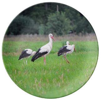 Prato De Porcelana Cegonhas brancas da migração, ciconia, em um prado