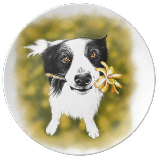 Prato De Porcelana Cutie de border collie
