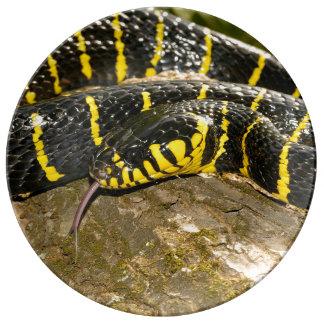 Prato De Porcelana Dendrophila de Boiga ou cobra dos manguezais