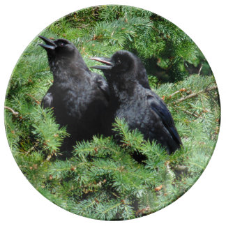 Prato De Porcelana Dois corvos
