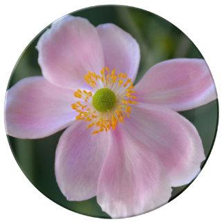 Prato De Porcelana Flor japonesa cor-de-rosa da anêmona