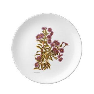 Prato De Porcelana Flores da ciência NZ do vintage - semidentata do