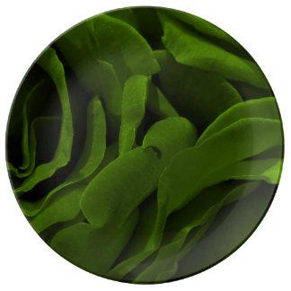 Prato De Porcelana Foto aveludado da flor dos rosas da verde azeitona