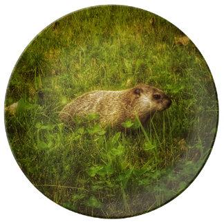 Prato De Porcelana Groundhog em uma placa da porcelana do campo