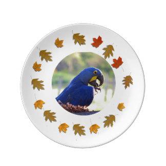 Prato De Porcelana Macaw do jacinto
