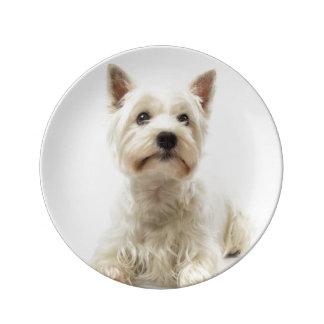 Prato De Porcelana Montanhas ocidentais brancas adoráveis Terrier