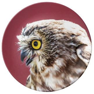 Prato De Porcelana O norte Serra-Whet o retrato da coruja