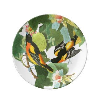 Prato De Porcelana Os animais selvagens dos pássaros de Audubon