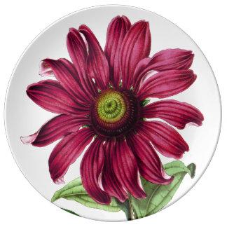 Prato De Porcelana Placa roxa de Coneflower