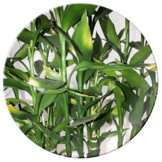 Prato De Porcelana Planta da casa do folha do verde e os de bambu dos