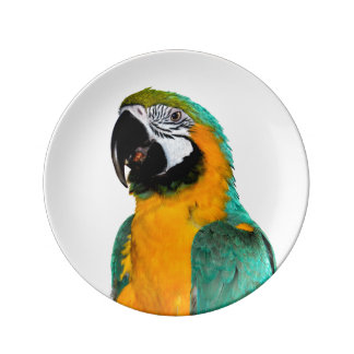 Prato De Porcelana retrato colorido do pássaro do papagaio do macaw