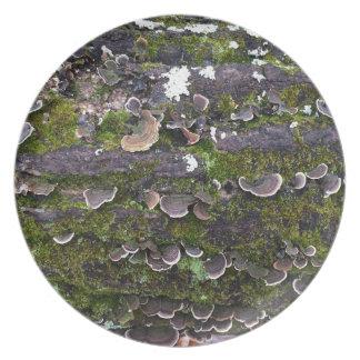 Prato divertimento mossy do cogumelo