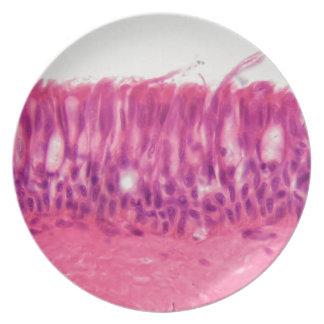 Prato Epitélio Ciliated sob o microscópio