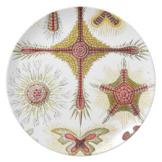 Prato Ernst Haeckel Discoidea