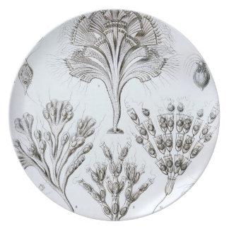 Prato Ernst Haeckel Flagellata