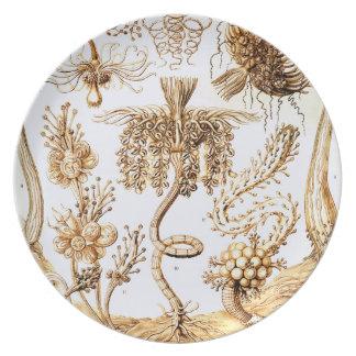 Prato Ernst Haeckel Tubulariae