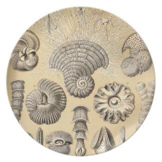 Prato Escudos de Ernst Haeckel Thalamophora