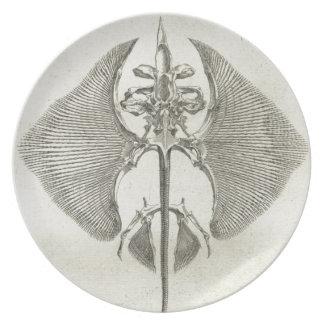 Prato Esqueleto de Thornback