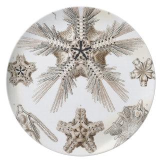 Prato Estrelas frágeis de Ernst Haeckel Ophiodea