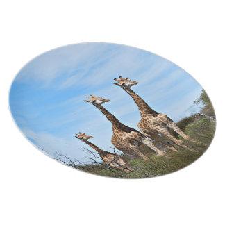 Prato Família do girafa na cume gramínea