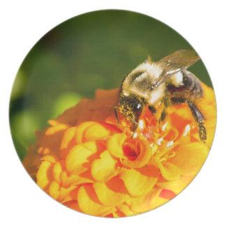 Prato Flor do amarelo alaranjado da abelha do mel com