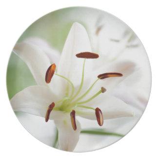 Prato Flor do lírio branco inteiramente aberta