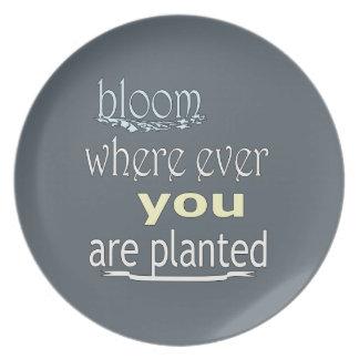 Prato Flor onde você é plantado nunca