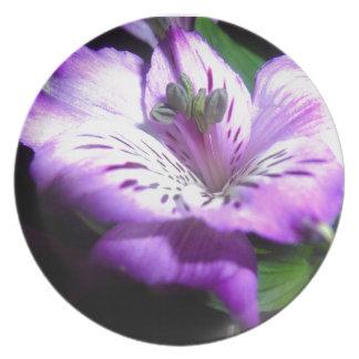 Prato Flora roxa