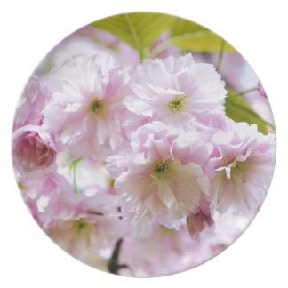Prato Flores cor-de-rosa na árvore de cereja japonesa na
