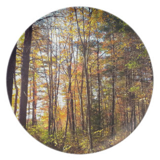 Prato Floresta do outono de New Hampshire