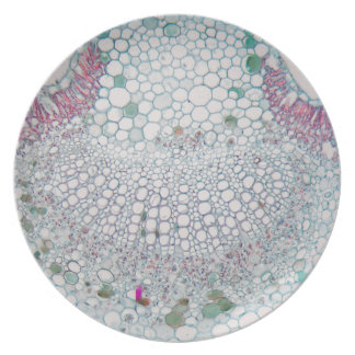Prato Folha do algodão sob o microscópio