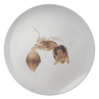 Prato Foto do microscópio de uma formiga