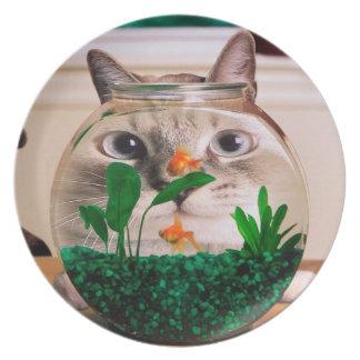 Prato Gato e peixes - gato - gatos engraçados - gato