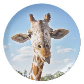 Prato Girafa parvo
