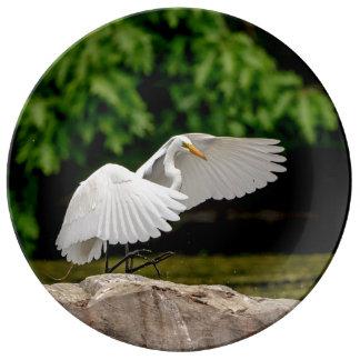 Prato Grande Egret