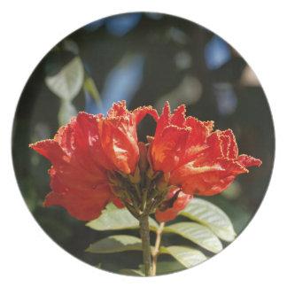 Prato iFlowers de um tuliptree africano
