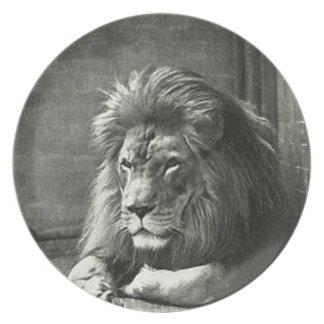Prato Ilustração do leão