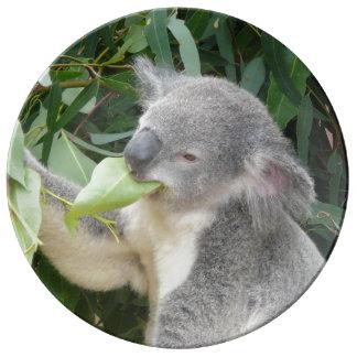 Prato Koala que come a folha da goma