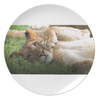 Prato Leão Cub africano