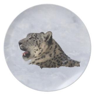Prato Leopardo de neve enterrado na neve