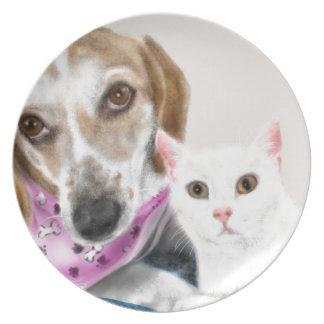 Prato Melhores amigos do cão e gato