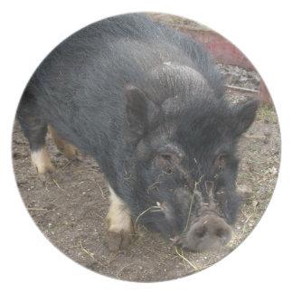 Prato Mini placa preta do porco