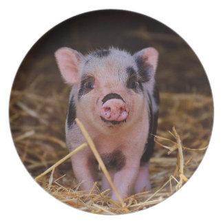 Prato mini porco