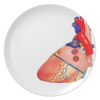 Prato Modelo humano do coração no fundo branco