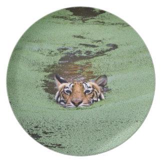 Prato Natação do tigre de Bengal