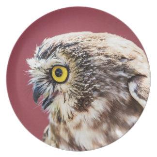 Prato O norte Serra-Whet o retrato da coruja