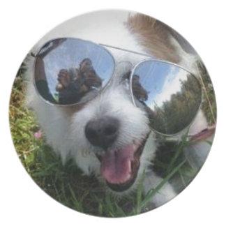 Prato Óculos de sol no FUTURO BRILHANTE do cão para MIM