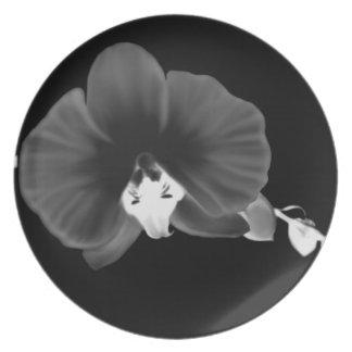 Prato Orquídea noturno